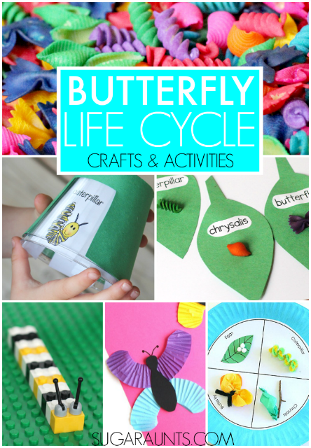 Creative butterfly life cycle crafts and activities for kids