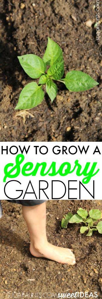 How to grow a sensory garden