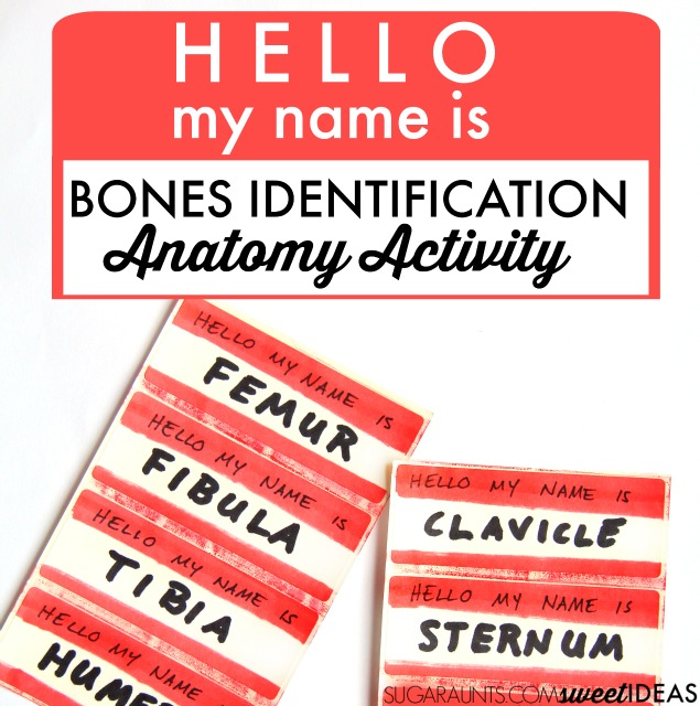 This bones anatomy movement and learning activity is perfect for kids or anyone learning human anatomy and bones or musculature. Add this to a health or gym curriculum to learn body parts with kids.