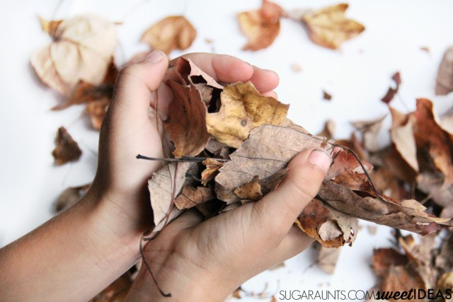 Fall Leaf themed auditory processing activities for sensory needs in kids.