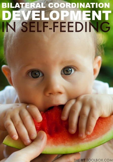 Discover typical development of bilateral coordination in feeding skills in kids, which are needed for improved independence in self-feeding.