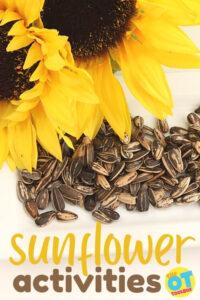 Sunflower activities